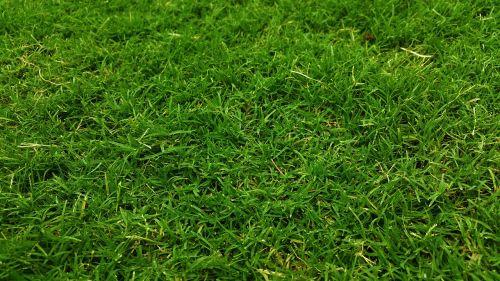 tamsiai žalia,golfo žalia,žolė,žolės laukas,žole žemė,ganyklos,pievos,žolės,žalia žolė,žemė,veja,žaidimų aikštelė,šlapias žolė