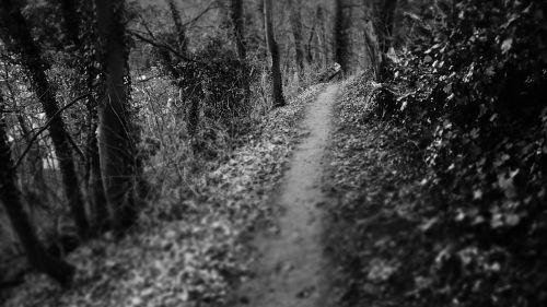 tamsi kelias,kelias,miškai,mįslingas,paslaptingas kelias,baisus,juoda ir balta,šešėlis,miškas,tamsus kelias,naktinis kelias,miško kelias naktį,miško takas naktį,kelias miške,žygiai naktį,žygiai miške