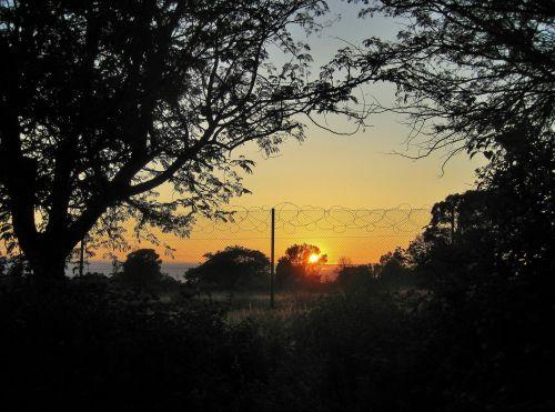 gamta, veld, krūmas, medžiai, tvora, rytas, aušra, saulė, aušra už tvoros