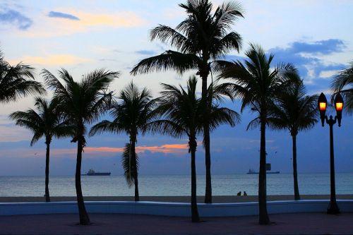 papludimys, medis, delnas, debesys, dangus, vandenynas, aušra, Saulėlydis, laivas, florida, Aušra