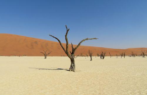 miręs,vlei,Namibija,dykuma,druska,medis,mirtis,kopos,namib,kelionė,afrika,kraštovaizdis,salar,fonas,ekranas,egzotiškas,acacia