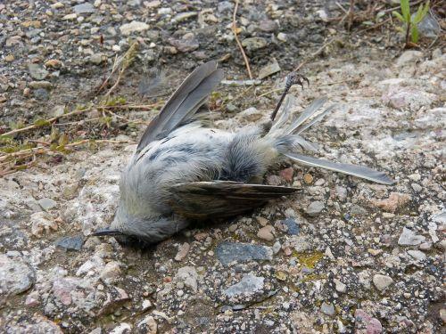 miręs paukštis,simbolis,metafora,transcendencija,miręs