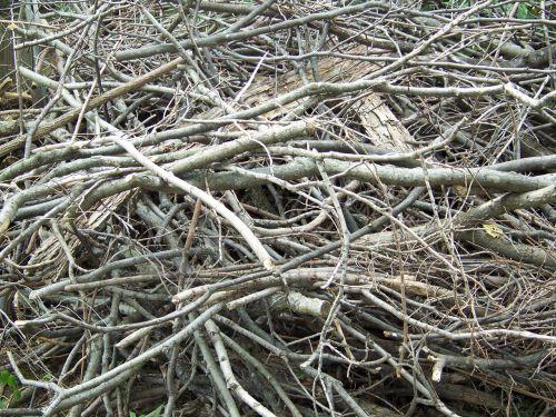 miręs, medis, filialai, galūnės, krūva, mediena, negyvos šakos