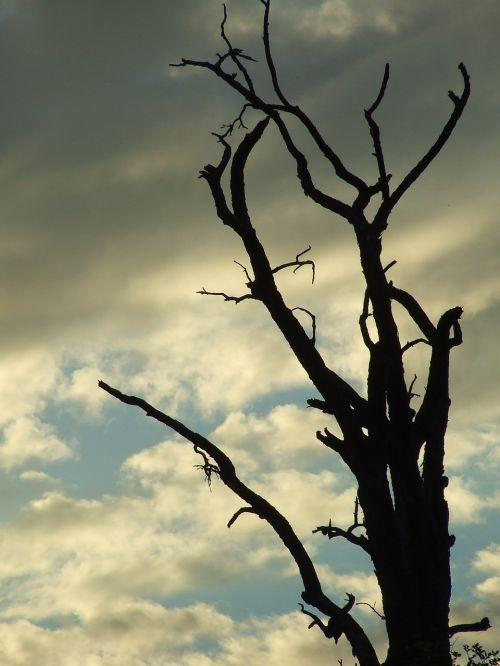 negyvas augalas,medis,medžio sistema,Kahl,estetinis,niūrus,nuotaika,filialai