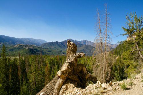 mirę & nbsp, medžiai, atstumas, aplinka, miškas, žalias, kalnai, pušys, medis & nbsp, bagažinė, medžiai, bagažinė, didžiulis, vaizdas, vista, dykuma, miškai, mirusieji medžiai ir medžio kamienai