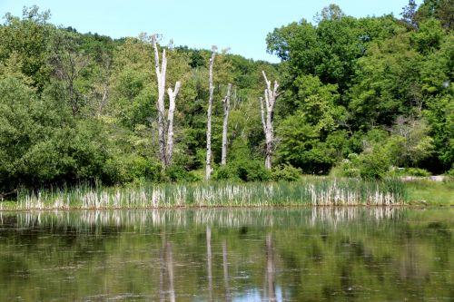 atspindys, ežeras, vis dar & nbsp, vandenys, ramus, ramus ir vandenys, mirę & nbsp, medžiai, medžiai & nbsp, vanduo, taikus, mirusieji medžiai atsispindi