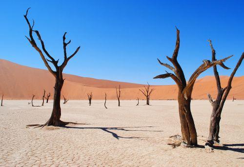 deadvlei,Namibija,afrika,dykuma,sausra,medis,miręs vlei,smėlis,sausas,sudegino,namib