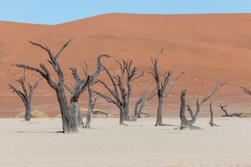 deadvlei,dykuma,medis,afrika,Namibija,Namib-naukluft parkas,negyvas pelkės