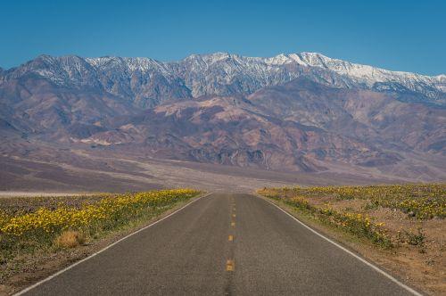 gėlės, laukinės vasaros spalvos, kraštovaizdis, greitkelis, vaizdingas, geltona, spalvinga, uždaryti & nbsp, viešasis & nbsp, domenas, tapetai, mirtis & nbsp, slėnis & nbsp, nacionalinis & nbsp, parkas, Kalifornija, usa, fonas, gėlių, žydi, žiedlapiai, žiedai, šviežias, dykuma & nbsp, auksas, teleskopas & nbsp, smailė, kalnas, mirties slėnis