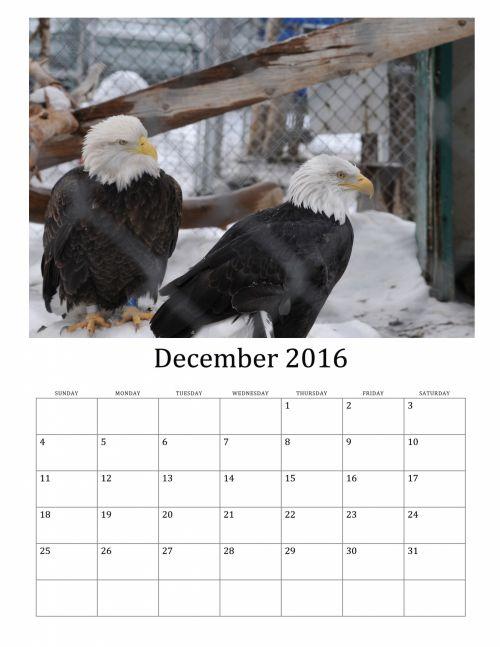 2016, 2016 & nbsp, kalendorius, žiema, sniegas, 2016 & nbsp, mėnesinis & nbsp, kalendorius, paukštis, paukščiai, erelis, ereliai, 2016 m. Gruodžio mėn. & Nbsp, kalendorius, gruodžio mėn ., kalendorius, 2016 m. gruodžio mėn. paukščių kalendorius