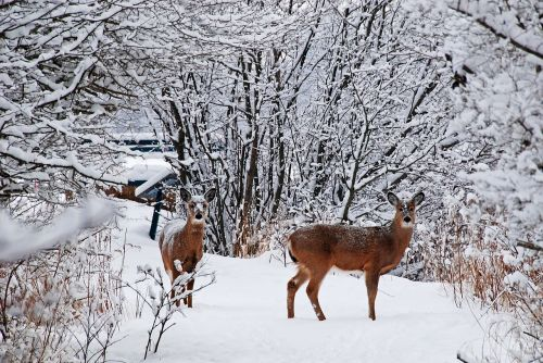 elnias,sniegas,šaltas,medis,miškas,išgąsdinti