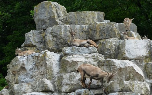 Deer Park, pobūdį, Ožiaragis, Rokas, gyvūnai