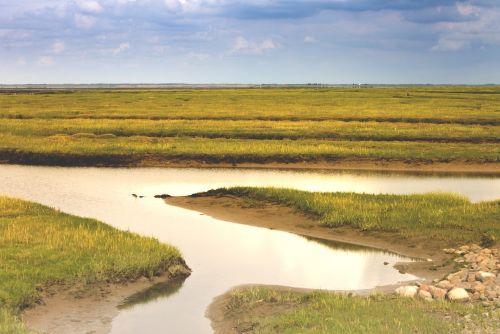 denmark,vatai,Šiaurės jūra,kranto,smėlis,wadden jūra,gamta,vanduo,jūra,kraštovaizdis,pieva,vasara,prie jūros,saulė