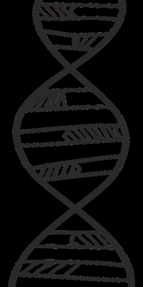 deoksiribonukleino rūgštis,sriegis,Danijos kryptys,biologija,genetika,molekulinė biologija,molekulinė,mokslas,vyras,nemokama vektorinė grafika