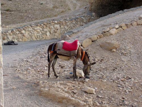 dykuma,asilas,kelias,Izraelis,Judo dykuma,laukimas,sustabdyti