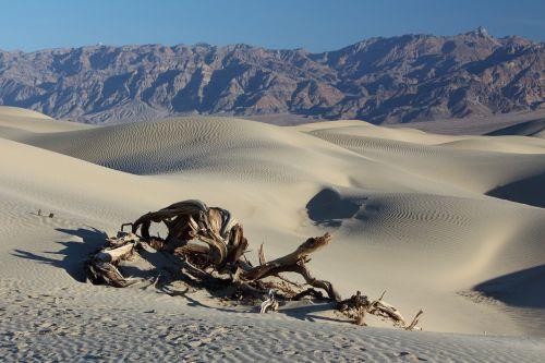 dykuma,mirties slėnis,smėlio kopos,dykuma,desolate,sausas,kraštovaizdis,miręs,medis,mediena