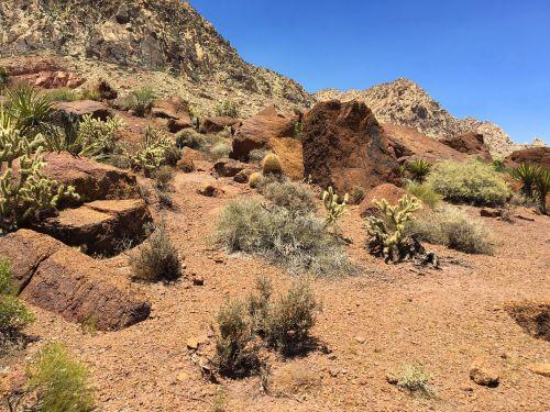 Dykuma, Akmenys, Gamta, Raudona, Amerikietis, Smėlis, Kalnas, Akmuo, Usa, Dykuma, Dykumos Kraštovaizdis, Smiltainis, Pietvakarius, Vasara, Vakarų, Nevada, Nevada Dykuma, Spalvingos Uolos