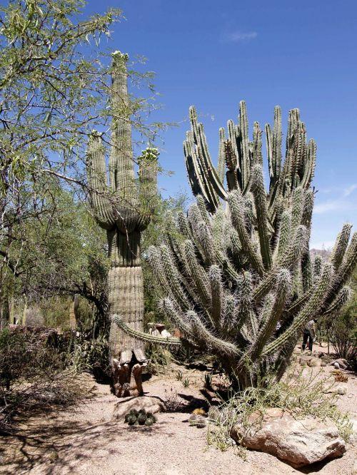 Dykuma, Kraštovaizdis, Peizažas, Rokas, Kaktusas, Karštas, Sausas, Gamta, Smėlis, Dirvožemis, Arizona, Usa, Lauke, Turistų Atrakcijos, Pietvakarių Usa