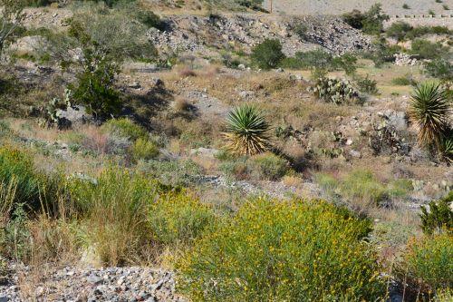 dykuma,augalai,žalias,kaktusas,kraštovaizdis,dykuma,peizažas,natūralus,laukiniai,lauke,aplinka,vaizdingas,žemė,gamta