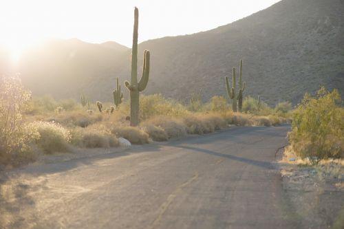 dykuma,kaktusas,kelias,dykumos kelias,Saguaro