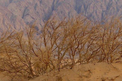 dykuma, Jordan, smėlynas