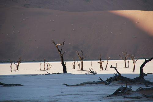 dykuma,miškas,medis,gamta,kopos,etosha nacionalinis parkas,Namibija,etosha