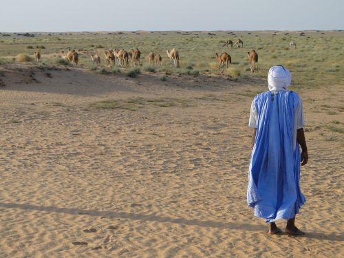 dykuma,kupranugariai,Arabas,Mauritanija