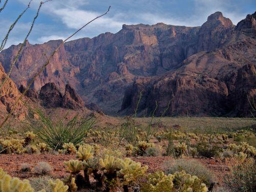 dykuma,Arizona,kaktusas,kalnas,sausas,sausas,dykuma,kofa,Rokas,Vakarų,vakaruose,vaizdingas,pietvakarius,kraštovaizdis,Arizonos dykuma,lauke