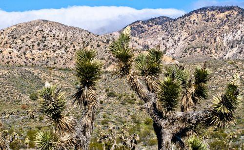 dykuma, kaktusai, kaktusas, kraštovaizdis, dykumos kraštovaizdis