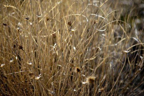 dykuma, dykuma & nbsp, aplinka, piktžolių, piktžolės, šepetys, akmenys, augalas, subtilus, Laisvas, viešasis & nbsp, domenas, fonas, tapetai, auksinis, geltona, dykuma & nbsp, šveitimas, wildflower, gėlė, gėlės, kaktusai & nbsp, gėlės, dykuma piktžolių