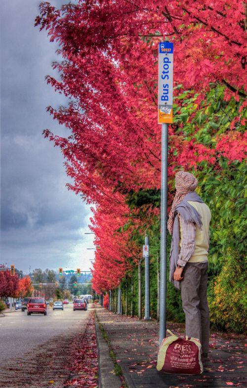 Desi,medžiai,raudona,gamta,miestas,nuostabu,kelionė,dangus,kelionė,kelionė,transportas,kelionė,oras,kelias,pasaulis,nuotykis,automobilis