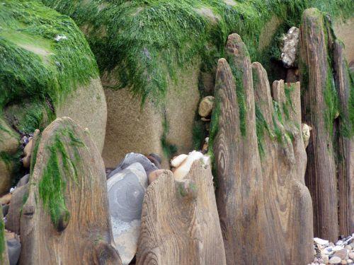 išsamiai,papludimys,išplauta,mediena,jūros dumbliai,akmenys
