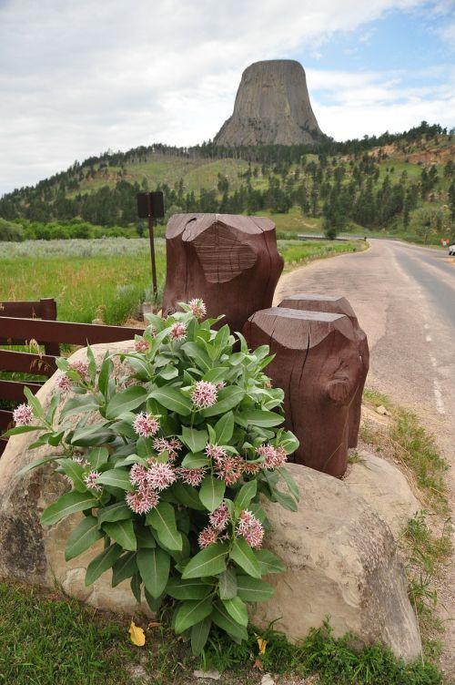 velnių bokštas,kalnas,kalnai,gėlės,laukinės gėlės,gamta,gėlė,lakolitas,juodos kalvos,Siaubo apskritis,Vajomingas