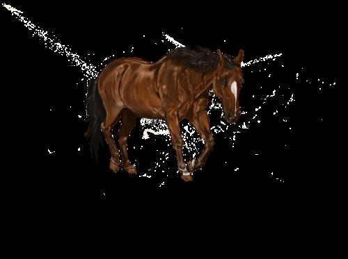 skaitmeniniai meno kūriniai,arklys,menas,įlanka,gyvūnas,skaitmeninis,skaitmeninė tapyba