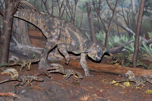 dinozauras,psittakozauras,psittacosaurus mongoliensis,Chordata,ceratopsian dinozauras,išnykęs,priešistorinis,kretažinis laikotarpis,paleontologija,žolėdis,bipedal,kūdikio dinozauras,dinozaurinis modelis,Royal Bc muziejus,Kanada