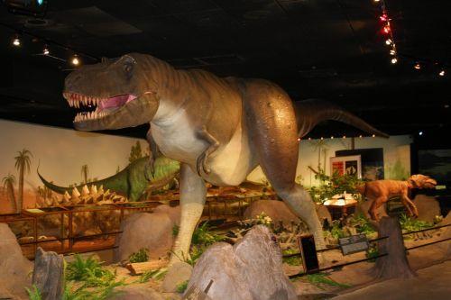 dinozauras, priešistorinis, muziejus, las & nbsp, vegas, žalias, didelis, dinozauras muziejuje 4