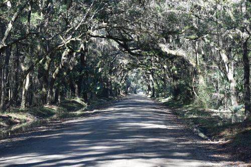 purvo kelias,miškas,Pietų Karolina,plantacija,Nuotolinis,saulės šviesa,Šalis,gamta,lauke,medis,tunelis,mediena,kelionė,kaimas