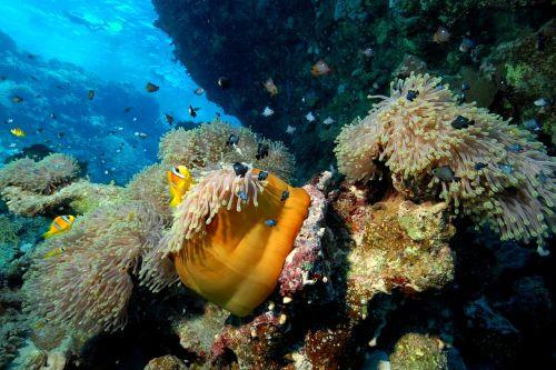 naras,jūra,nardymas,po vandeniu,nardymo įranga,po paviršiumi,koralinis rifas,projektas,jūros dugnas,povandeninis gyvenimas,žuvis