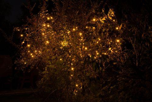 Diwali,žibintai,žiema,šventė,festivalis,šventė,tradicinis,Kalėdos,šventinis,medis,santa