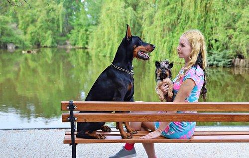 Doberman, šviesūs moteris, šunys, Draugystė, meilė, padas, ežeras