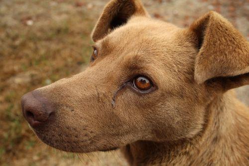 šunys,liūdnas šuo,bjaurus šuo,lenktynės,paliktas,sergantis šuo,benamiai,žmogaus geriausias draugas,vidaus,pasikliautinas augintinis,gatvė,žinduoliai,rudas šuo,fauna,šuo,gyvūnas,šuniukas,atrodo,gyvūnai,naminis gyvūnėlis,akis,liūdnas,verkti