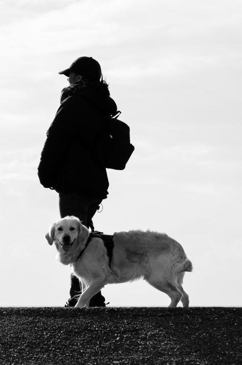 šuo,žmogus,gyvūnas,papludimys,labradoras,laukinės gamtos fotografija,šuo eina,gyvūninės fotografijos,švietimas,linksma,gamta,portretas,Auksaspalvis retriveris,šunų portretas,šuo ant pavadėlio,Moteris,retriveris,šuo ponia,veiksmas,šuo žmogus,šuo su žmogumi,paklusnumas,auksinis retriveris,vaikščioti,draugas,šventė,nikon d5100,Šiaurės jūra,norddeich,juoda ir balta