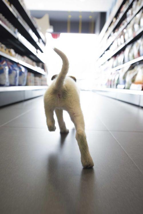 šuo,parduotuvė,paleisti,naminis gyvūnėlis,linksma