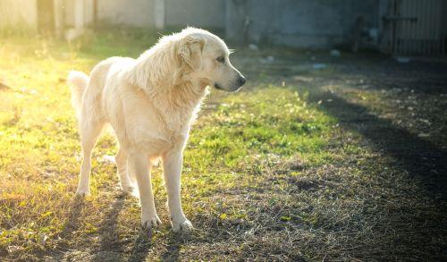 šuo,draugas,šuniukas,gyvūnas,mielas,vasara,linksma,laimingas,jaunas,mažai,veislė,naminis gyvūnėlis,šunys,žavinga,mielas