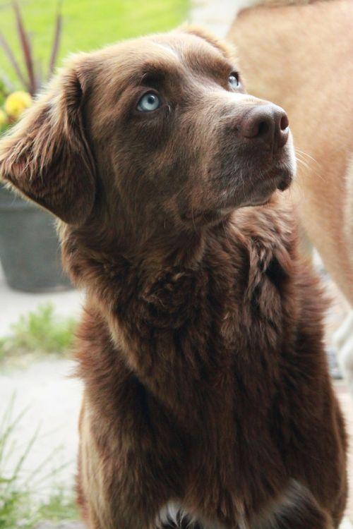 dog canine brown