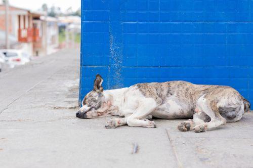 šuo,šuniukas,miega,naminis gyvūnėlis,gyvūnas,gyvūnai,kalė,profilinis šuo,žavinga,saldumas,paklusnus šuo,draugas,geriausias draugas,tik,solo,laimingas,sergantis šuo,vidaus,šunys,mylėti,pasikliautinas augintinis,paliktas,bjaurus šuo,gatvė,draugiškas,verkti,lojalumas,liūdnas,liūdnas šuo