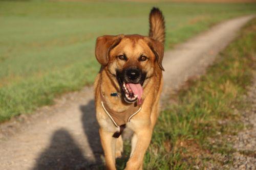šuo,laimingas,snapelis,džiaugsmas,raganos,rait