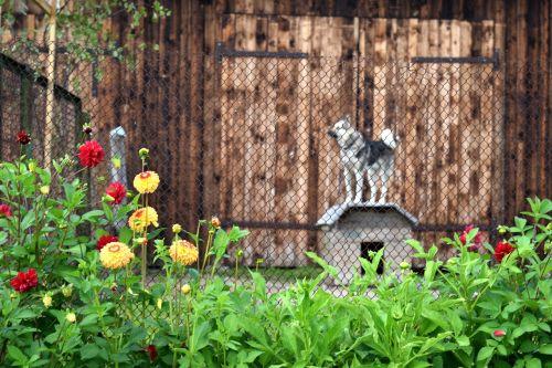 šuo,veislynas,kaimas,kaimas,tvora,gėlės,Šalis,grandinės,juostos,pririštas šuo,prieglobstis,vasara,ūkis,tvartas,kaimiškas,kaimas