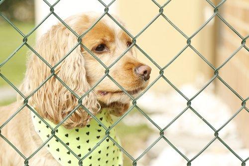 šuo, šuo už grotų, Šuo užrakinta, susiję šuo, liūdna šuo, augintinė, gyvūnas, gyvūnai