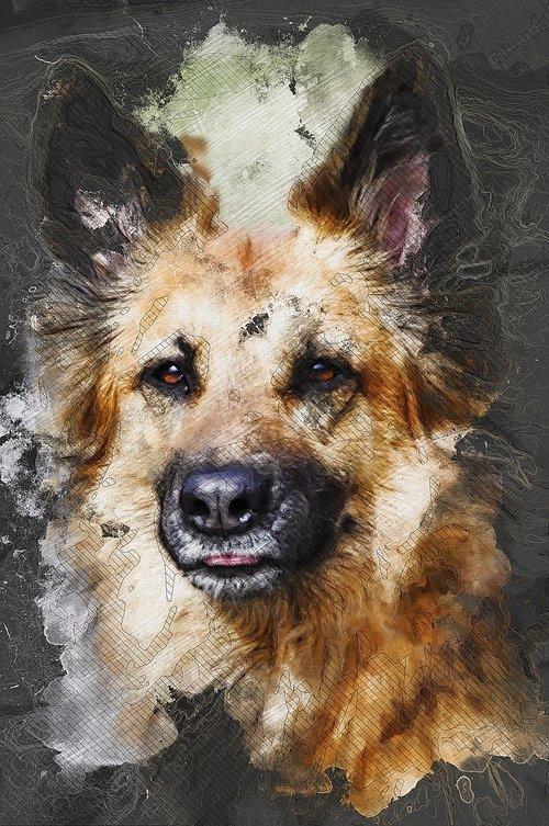 šuo, hibridinių, rudi, draugas, portretas, draugas, šunų, gyvūnas, augintinė, pobūdį, vokiečių Sheppard, skaitmeninis manipuliavimo, fotomenas, Nemokama iliustracijos